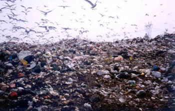 eastern garbage patch portrayal